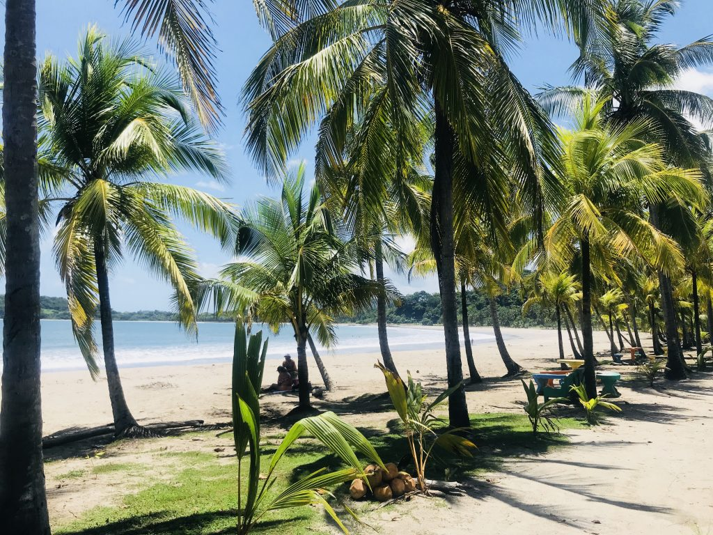 Palmen am Strand, Guancaste