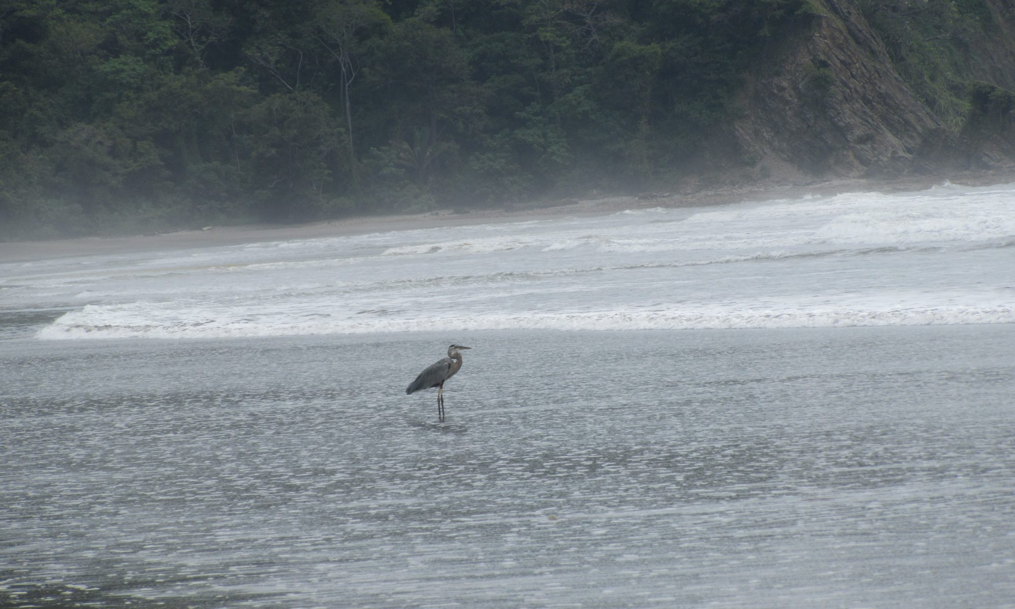Get a Reservation for Hotel Paraíso del Cocodrilo and watch exotically birds at the beach