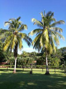 Samara Guanacaste