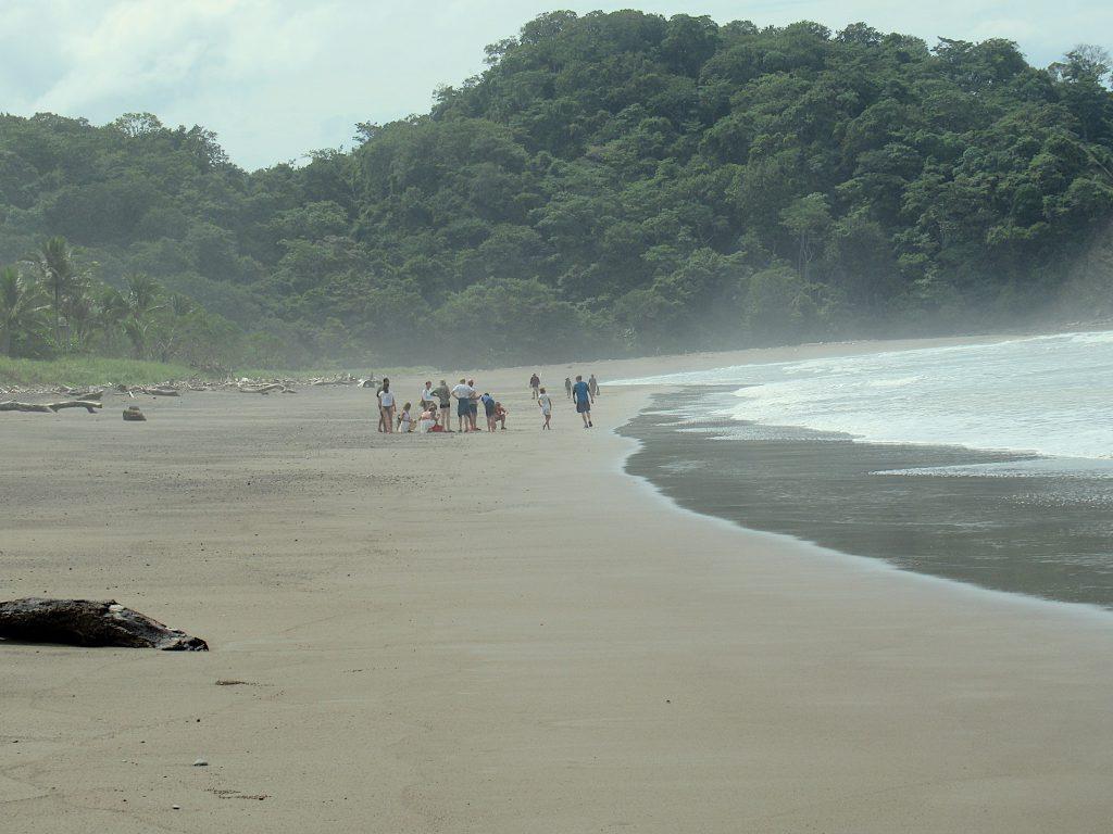 Turtles arrive playa