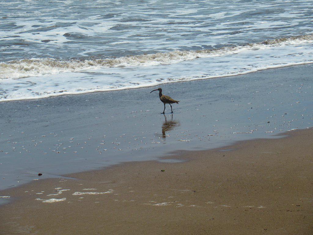 Birds on vacation in Costa Rica